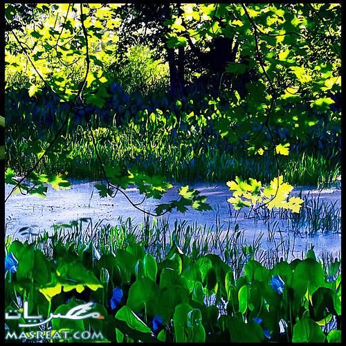 شم النسيم | شلالات ومعرض زهور الربيع حديقة الاورمان