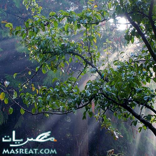 حديقة الحيوان في شم النسيم 2010 : عرض البجع والنمر السرفال لاول مرة