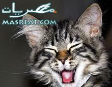 نكت تموت من الضحك مصرية