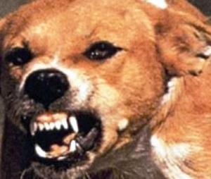 كلاب مسعورة تهاجم المواطنين في مدينة نصر Dog-nasr-cityc56