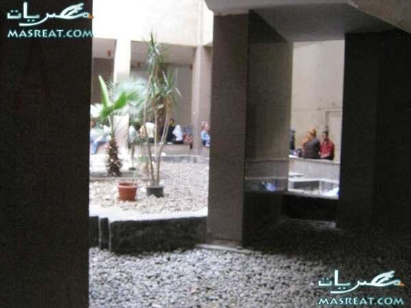 نتيجة كلية الزراعة جامعة عين شمس