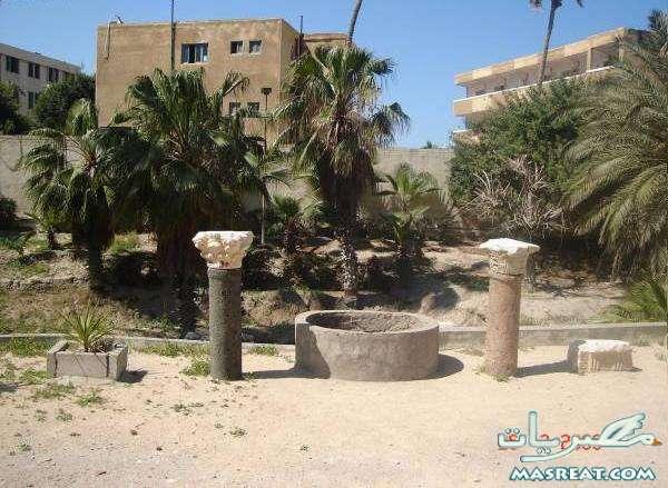 نتيجة كلية السياحة والفنادق جامعة الاسكندرية 2019 لجميع الاقسام