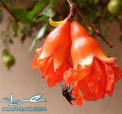 مسجات شم النسيم 2015 رسائل مع اغنية سعاد حسني الدنيا ربيع