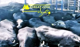 اسعار اللحوم في مصر اليوم