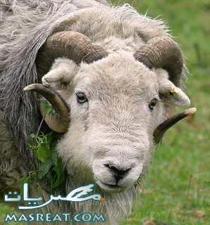 ميعاد عيد الاضحى المبارك 2016