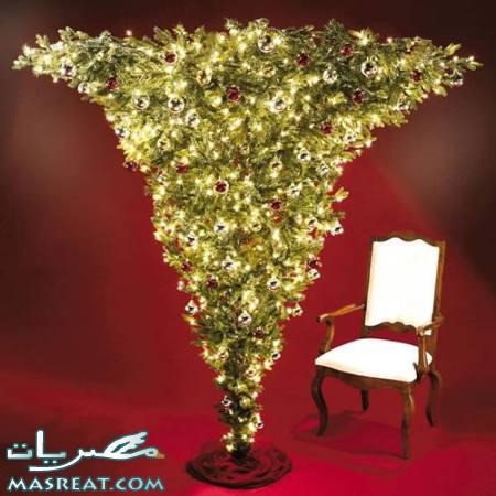 صور اشكال شجرة عيد الميلاد