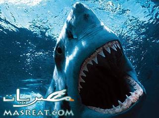 اسماك القرش في شرم الشيخ